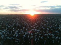 The cotton fields I used to ride in.